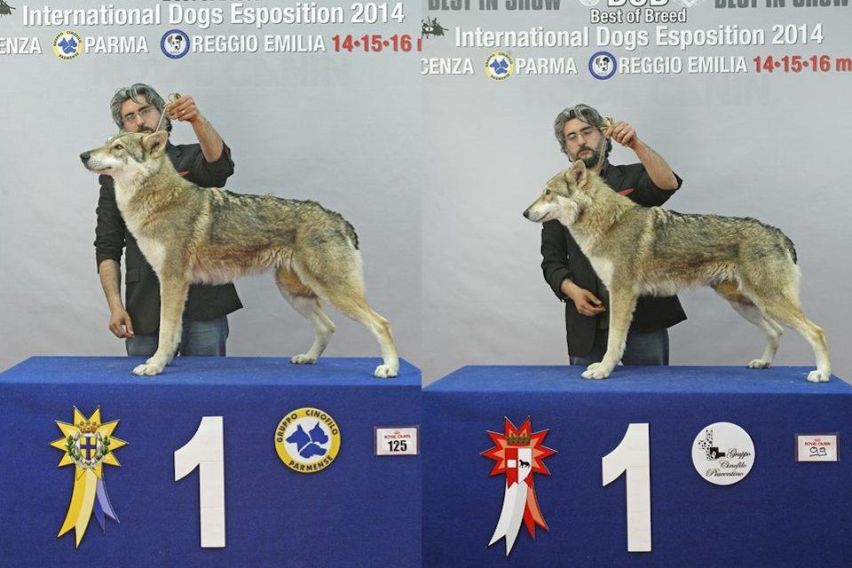 expo-risultati-03